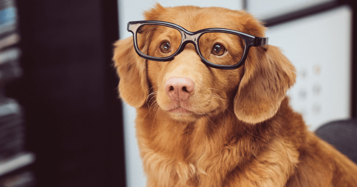 Dog wearing glasses in a office
