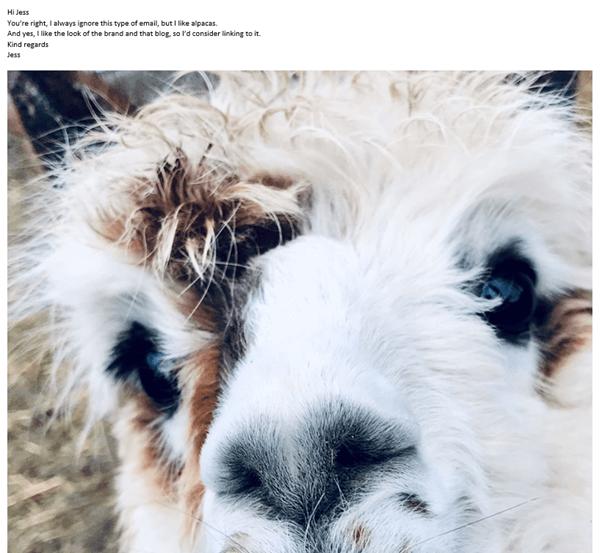 alpaca-example-email