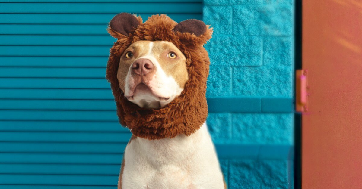dog wearing bear hat