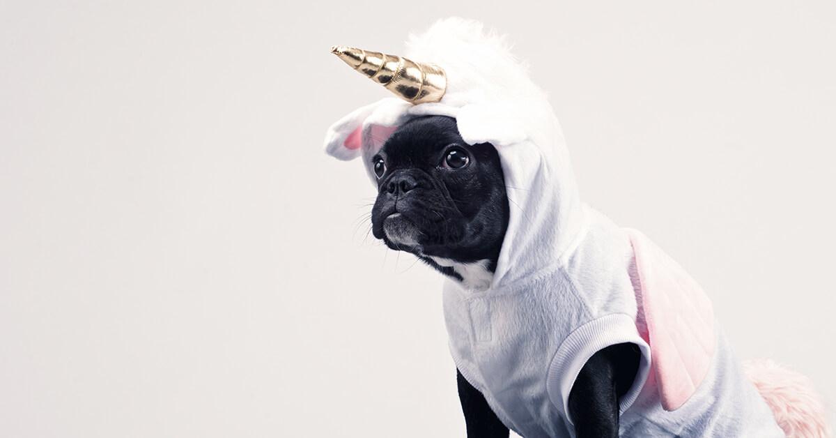 Unique brand story - dog wearing a unicorn suit